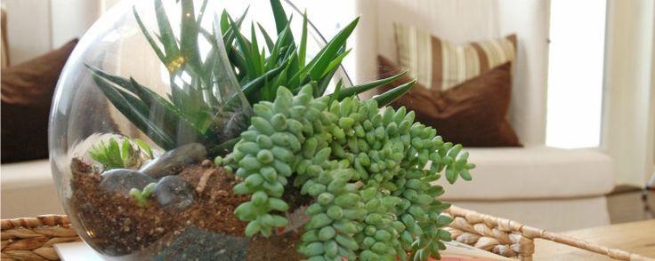 Aprenda a Fazer Jardins em Miniatura - A arte de reproduzir jardins em miniatura, geralmente dentro de recipientes de vidro, é a idéia central dos terrários. Qualquer pote desse material serve como base para a montagem desses itens decorativos, que tornam o ambiente mais bonito e moderno.  Como montar um terrário  O processo é sim... - http://www.ecoadubo.blog.br/ecoblog/2014/09/10/aprenda-a-fazer-jardins-em-miniatura/