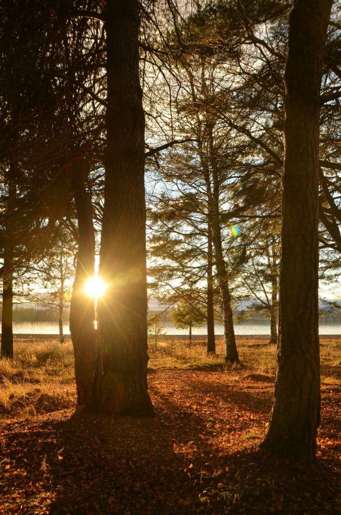 November in Sweden | golden light | sunset  www.by-addy.com