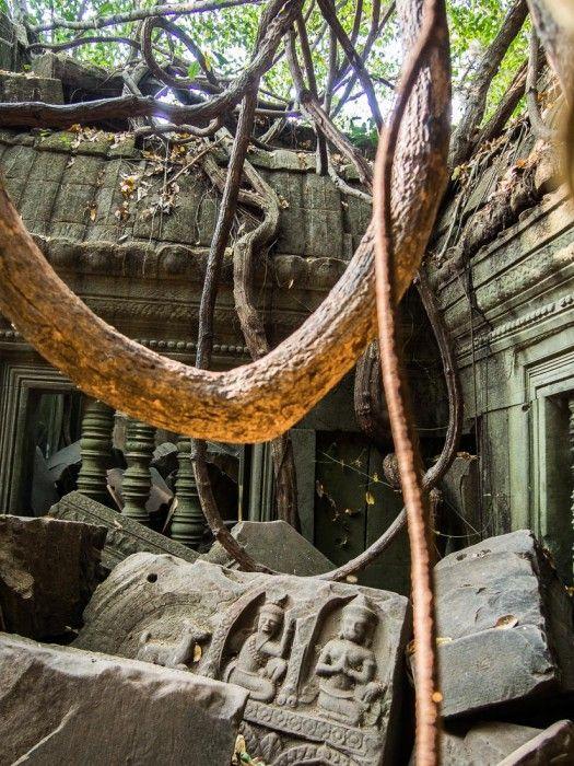 Angkor's Jungle Temple - Cambodia