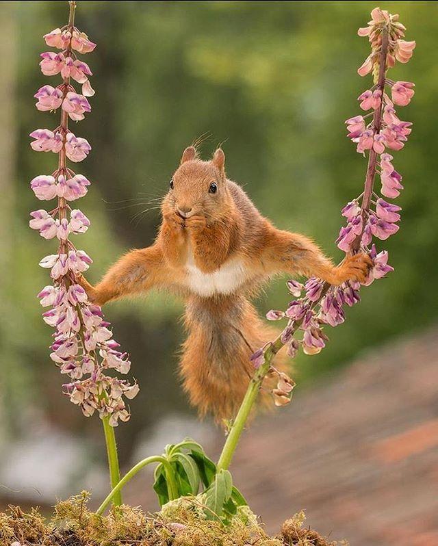 Kung-fu Squirrel Photo by ©Geert Weggen