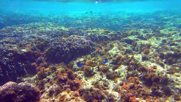 Calming Music.Healing Music.10 min.Coral Reef (+playlist)