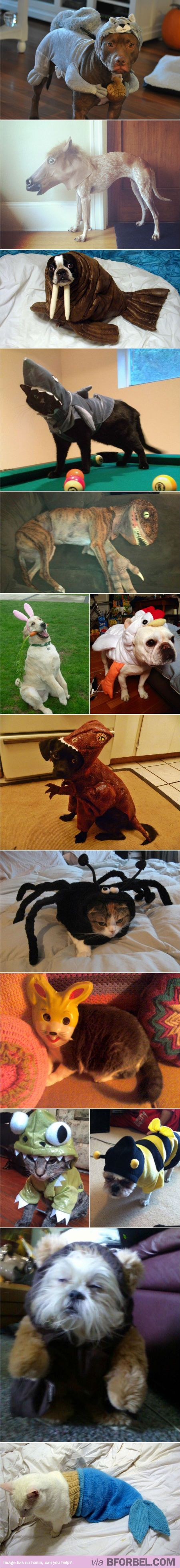 Animals dressed as other animals. Can't handle the cuteness.