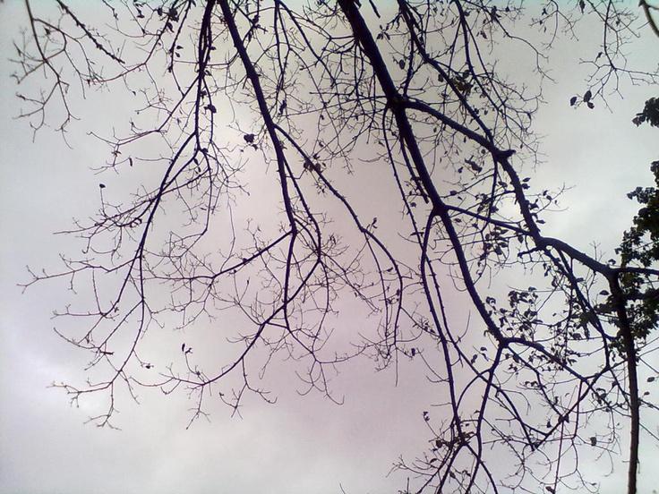 PHOTOGRAPHY :: 15102011716.jpg image by phililen3 - Photobucket