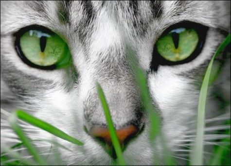 green eyes...What a great post! We just absolutely love animals. Whether it's a dog, cat, bird, horse, fish, or anything else, animals are awesome! Don't you agree? -- courtesy of www.canoodlepets.com