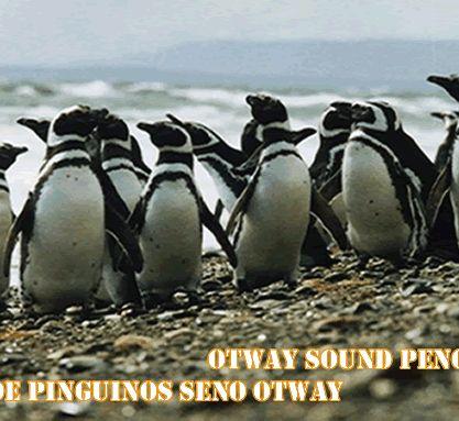 Seno Otway, #pingüineira, Punta Arenas, #chile #patagonia Melhores meses para ver Pinguins: dezembro e janeiro