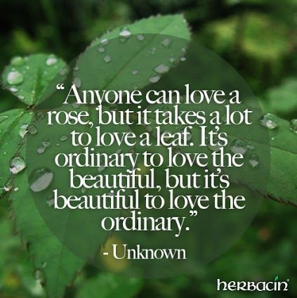 """Anyone can love a rose, but it takes a lot to love a leaf. It's ordinary to love the beautiful, but it's beautiful to love the ordinary."" - Unknown #Quote"