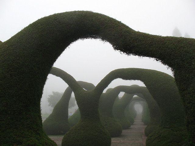 Zarcero topiary garden   Flickr , Costa Rica
