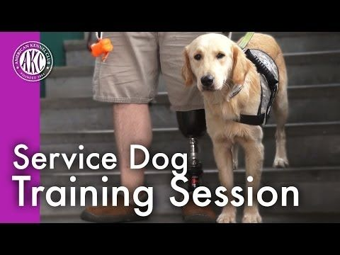 Service Dog Training Session - YouTube