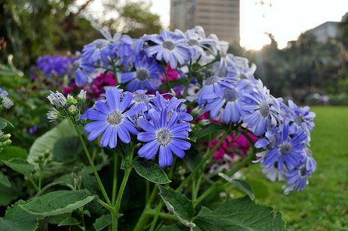 Flower,Flowers,Greenery Beatiful Photogaphy Photos Amazing http://www.youtube.com/channel/UCJNAZ9OFsulr4ZATFJZjibQ