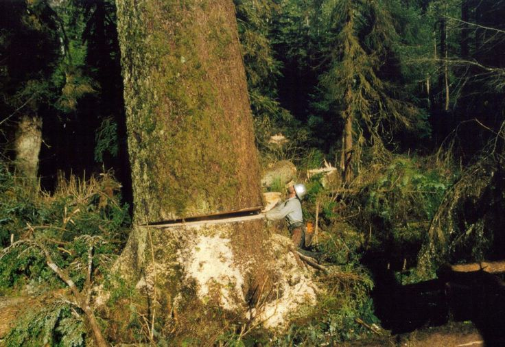 Logging - rigging men and timber fallers Heath Debuque..at ...