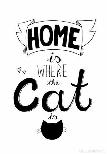 Resultado de imagem para home is where the cat