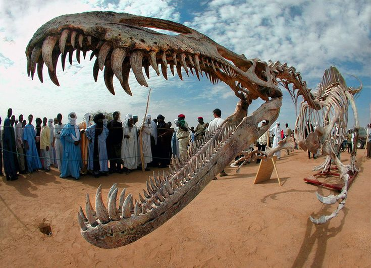 This cast of a Suchomimus dinosaur seen in Agadez, Niger, was donated to the country of Niger by paleontologist Paul Sereno at the Flamme de...