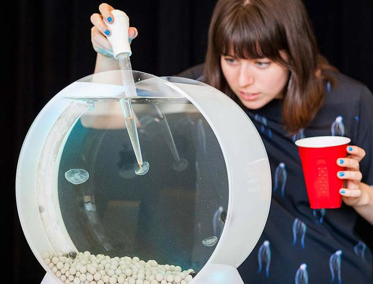 This is how you feed pet jellyfish domonstrated by me for Jelly fish pet