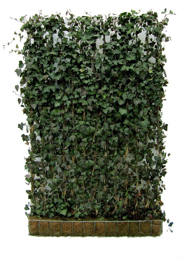 Mori Green Living Fence | Fences, Gates | Pinterest | Living Fence, Fences  And Green Roofs