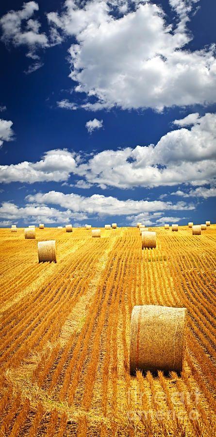 Campos com fardos de feno em fazenda em Saskatchewan, Canadá.