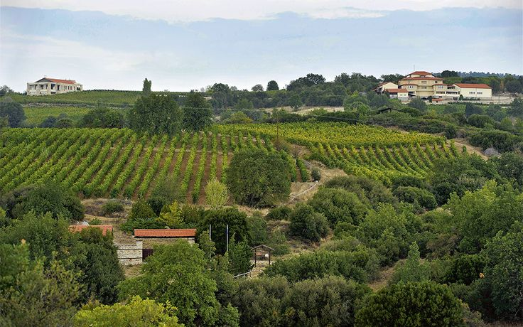 Domaine Babatzimopoulos - Greece Is