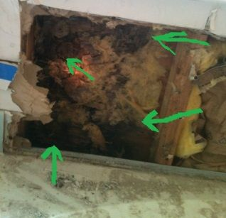 how to safely remove mold from your home getting rid of mold is