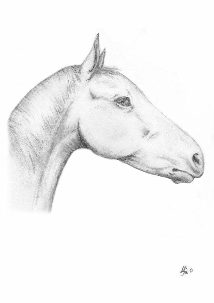 a horse study
