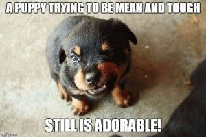 10 funny puppy memes                                                                                                                                                                                 More