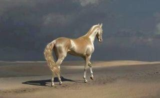 """""""この馬ちょーぜつかっこいい。 実在するんだ。 映画の世界から出て来たみたい。 どこか知らない世界に連れて行ってくれそう。  #アハルテケ"""""""