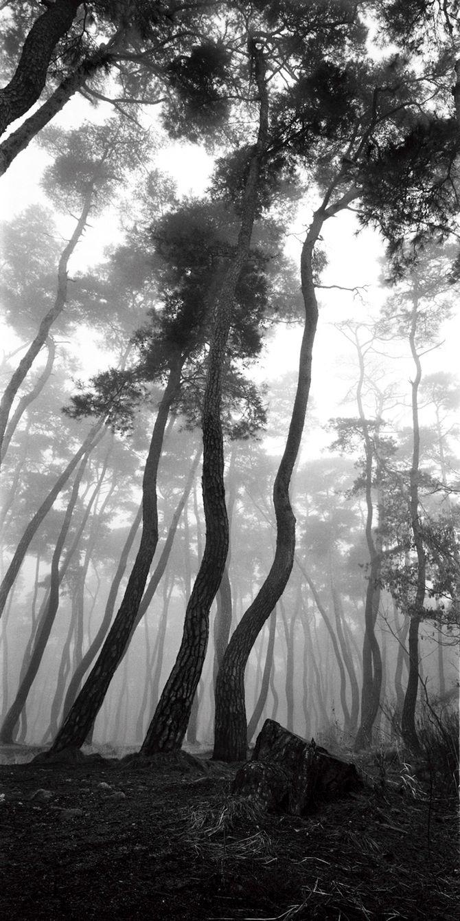 배병우(Bae Bien-U) / 소나무(Sonamu, Pine tree)