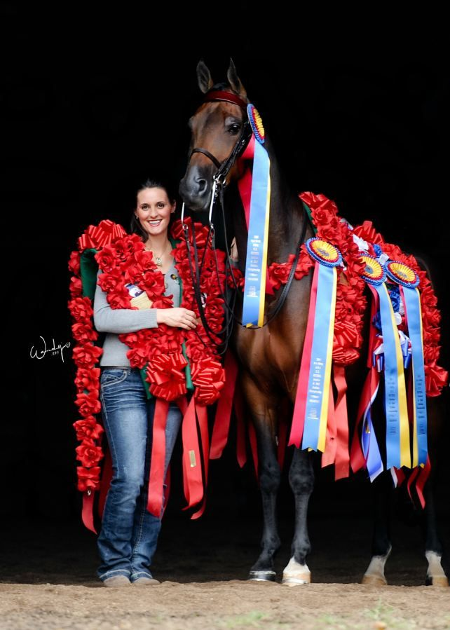 17 Best Images About National Show Horse On Pinterest