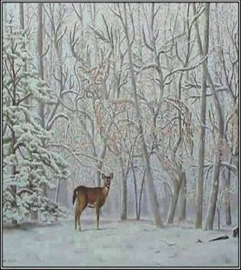 Wonga IQ: Click LIKE if you can spot the 2nd deer within 5 seconds!