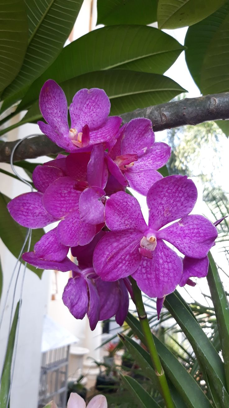 Pin oleh Lilis Suryani di Orchid