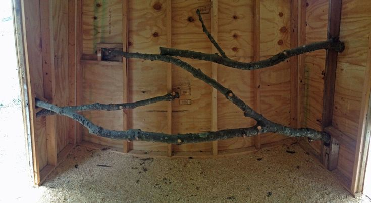 Free roosts, thanks to the big oak in the middle of the yard. Chicken Coop Confessions