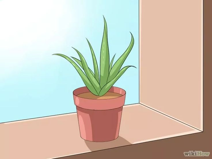 Image intitulée Care for Your Aloe Vera Plant Step 1