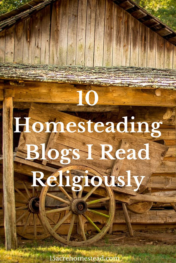 10 Homesteading Blogs you need to be following regularly!