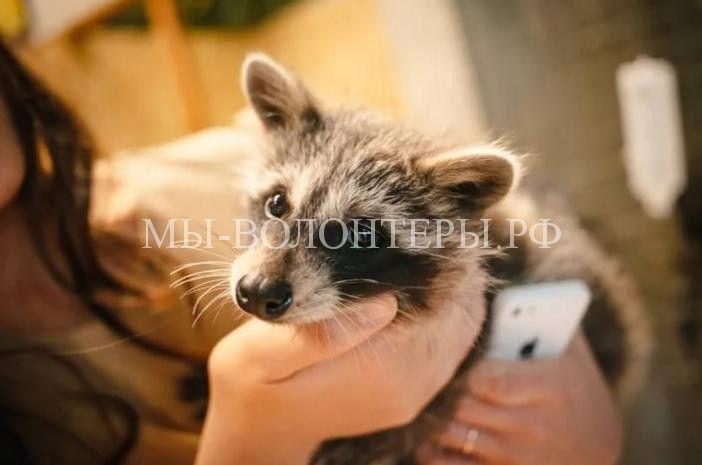 Спасение животных из заброшенного контактного зоопарка  http://xn----dtbjxcjfbus6gj.xn--p1ai/animal-protection/animal-resque/%d1%81%d0%bf%d0%b0%d1%81%d0%b5%d0%bd%d0%b8%d0%b5-%d0%b6%d0%b8%d0%b2%d0%be%d1%82%d0%bd%d1%8b%d1%85-%d0%b8%d0%b7-%d0%b7%d0%b0%d0%b1%d1%80%d0%be%d1%88%d0%b5%d0%bd%d0%bd%d0%be%d0%b3%d0%be-%d0%ba%d0%be/ В Самаре правоохранители и биологи спасали животных из ко