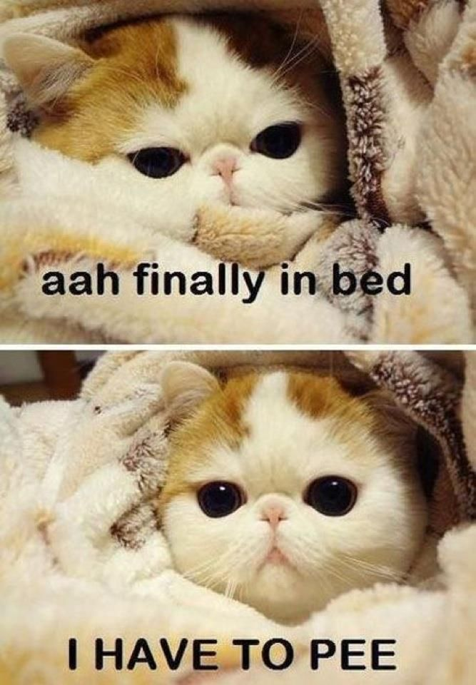 haha so true!: Funny Cat, So Cute, Sotrue, Funny Pictures, Cute Kitty, My Life, So True, Totally Me, True Stories