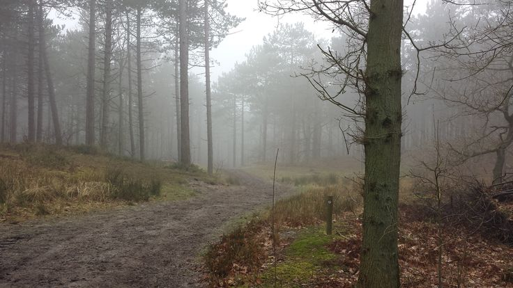 Mistige dag in het bos