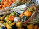 Gourds-A-Plenty puzzle in Puzzle of the Day jigsaw puzzles on TheJigsawPuzzles.com. Play full screen, enjoy Puzzle of the Day and thousands more.