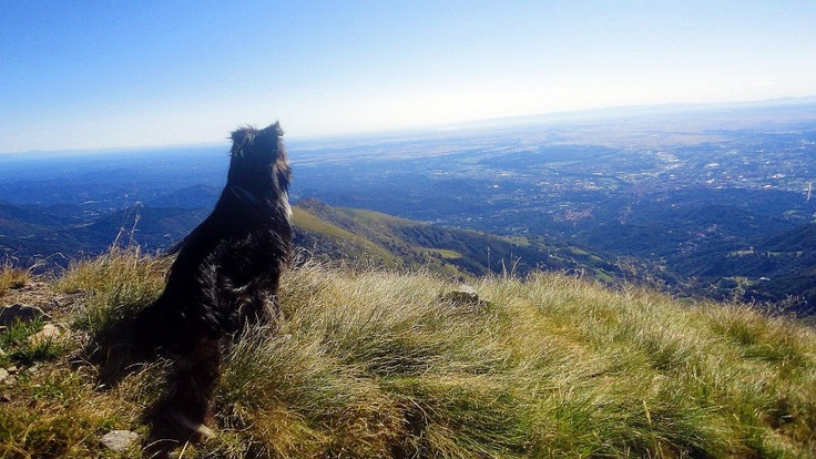 Even #dog cannot resist beautiful landscape! #Oasi #Zegna #Italy www.oasizegna.com from Marco Bertazzoli - Google+