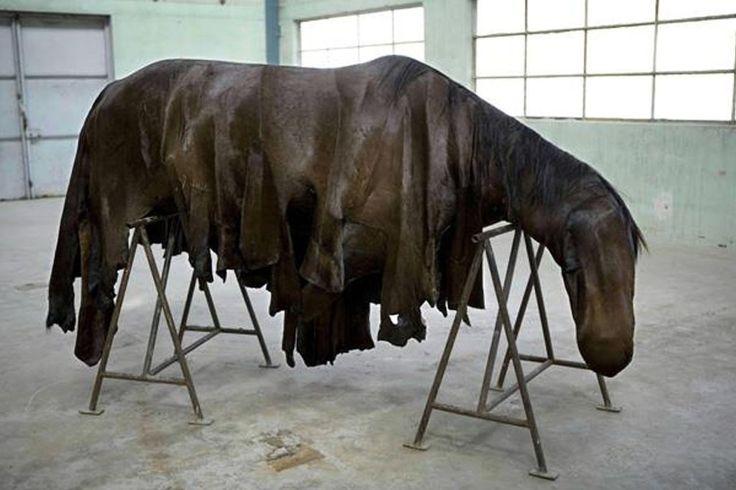 Morto cavallo Quintana, Sauro Presenzini, agli animali si chiede troppo