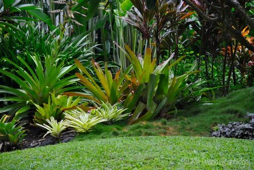 This garden is so lush and green, the planting is explained throughout the article.