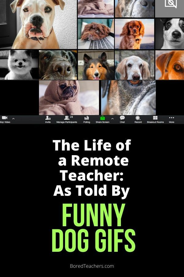 The Life Of A Remote Teacher As Told By Funny Dog Gifs Teaching Humor Teacher Humor Teaching Memes