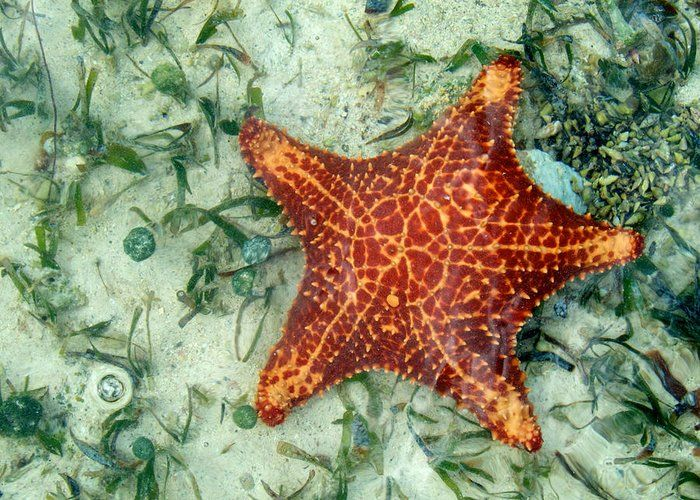 "Running Starfish Greeting Card for Sale by Mary Lee Dereske.  Our premium-stock #greetingcards are 5"" x 7"" in size and can be personalized with a custom message on the inside of the card.  All cards are available for worldwide shipping and include a money-back guarantee. #ocean #starfish"