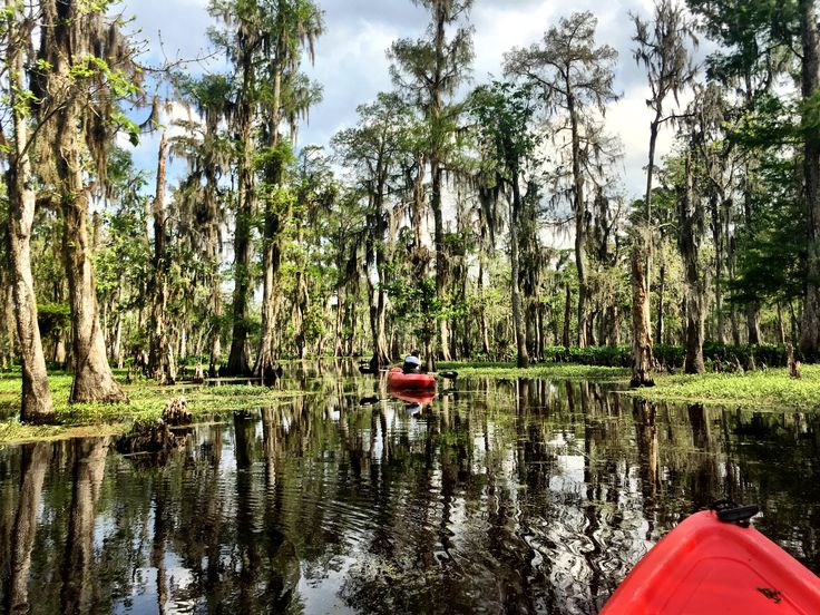 Kayaking the bayou, just outside New Orleans. Louisiana
