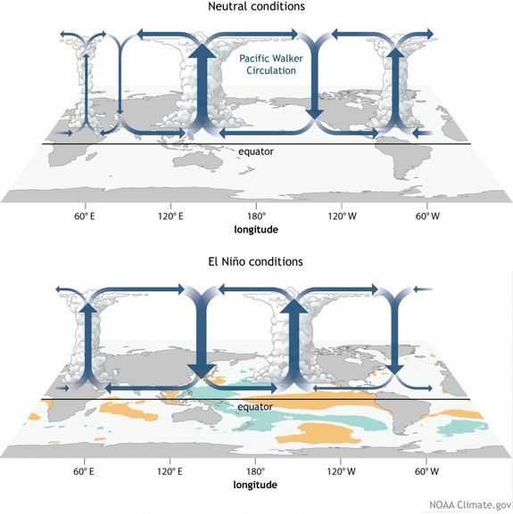 How the Walker Circulation changes from neutral to El Niño conditions.