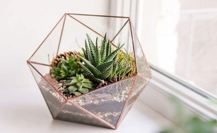 Plantas de interior en decoración; tipos, consejos y cómo cuidarlas en casa.  #plantas #decoracion #vivienda #casa #interiorismo