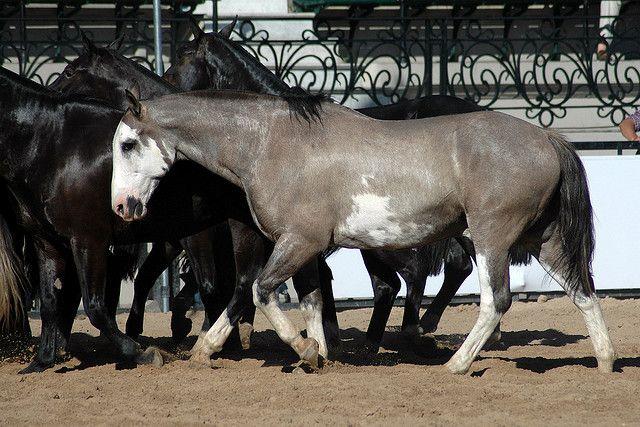walking horse | Flickr - Photo Sharing!