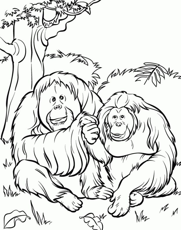 Jungle Animals Coloring Pages Preschool : 63 best images about harrison 2nd birthday on pinterest jungle