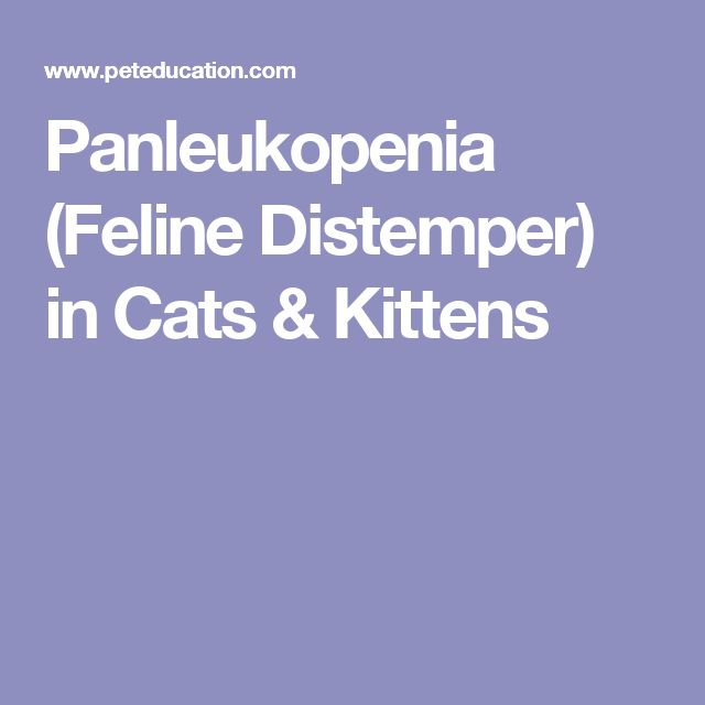Panleukopenia (Feline Distemper) in Cats & Kittens