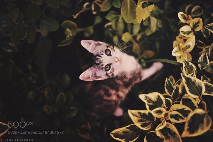 Bad camouflage by ZoranPhoto via http://ift.tt/2fo6l7g