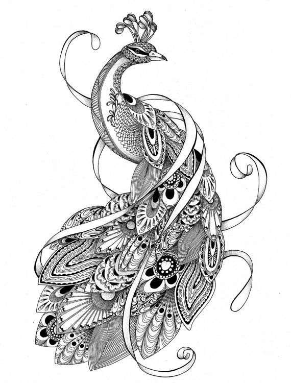 colouring pages adult coloring pages of the tangled peacock instant digital download