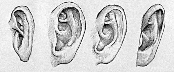 Ohren dreidimenstional zeichnen