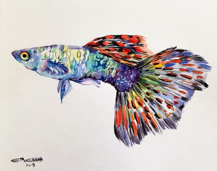 Pin De Watercolor Painting Blog En Pez Guppy Peces Guppy Painting Peces